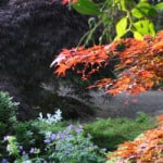 shde loving plants for shady areas of the garden