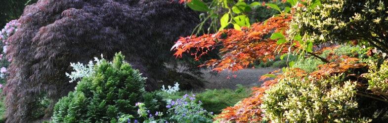 100+ Plants For Shade Including Shrubs, Perennials, Bulbs & Ferns