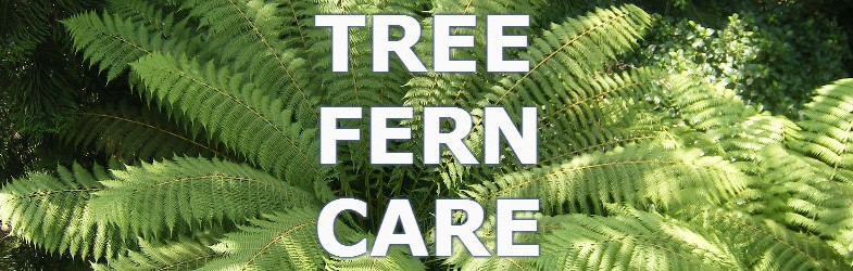 tree fern care and how to grow them successfully
