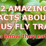 12 facts about venus fly traps