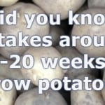How Long Do Potatoes Take To Grow from planting to harvest