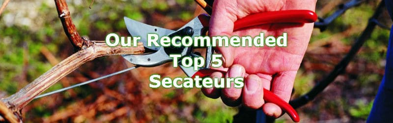 top 5 best secateurs for all round pruning