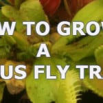 how to look after a venus fly trap
