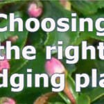 types of hedges and which to plant for what situation