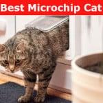 Microchip cat flap reviews