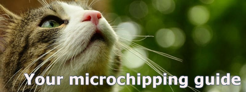 microchipping your cat guide