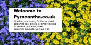 Pyracantha.co.uk, Discover the latest gardening advice, tips as well as the very best gardening product reviews
