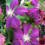 Top 15 plants with purple flowers