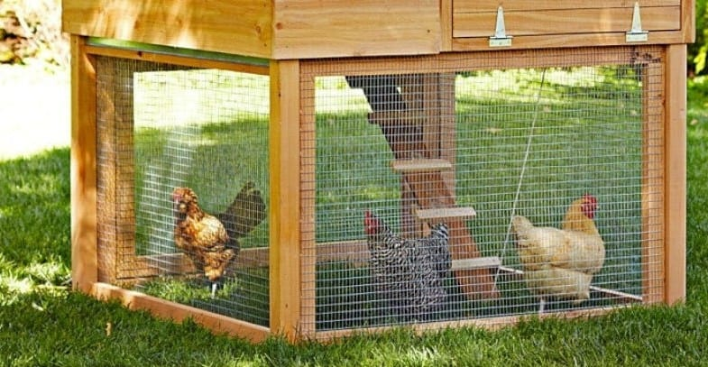 After comparing over 25 chicken coop we set our goal as finding the best chicken coop and were able to narrow it down to just 6 top models. Read our buyers guide.