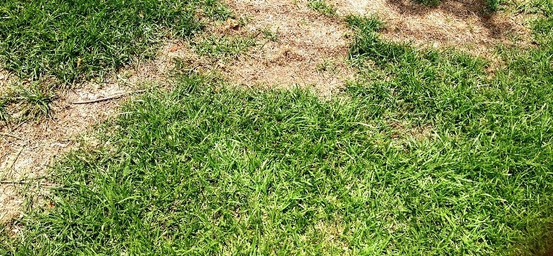 How to Repair a Lawn with Dead Patches – By seed & laying new turf