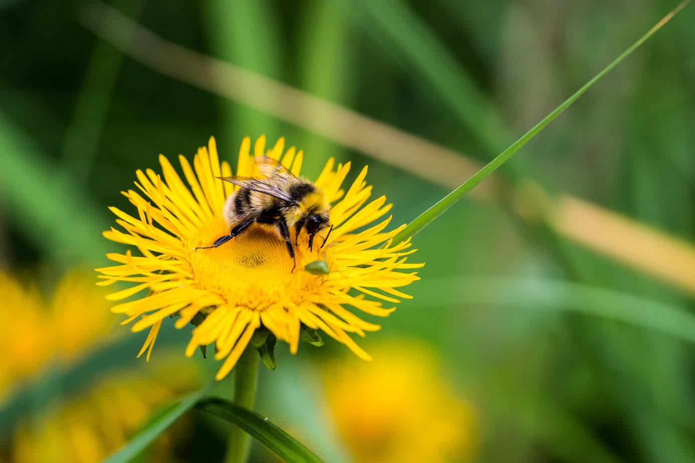 Saving the Bees - What not to do in the garden to help the bees