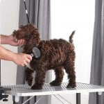 Best Pet Grooming Table Reviews