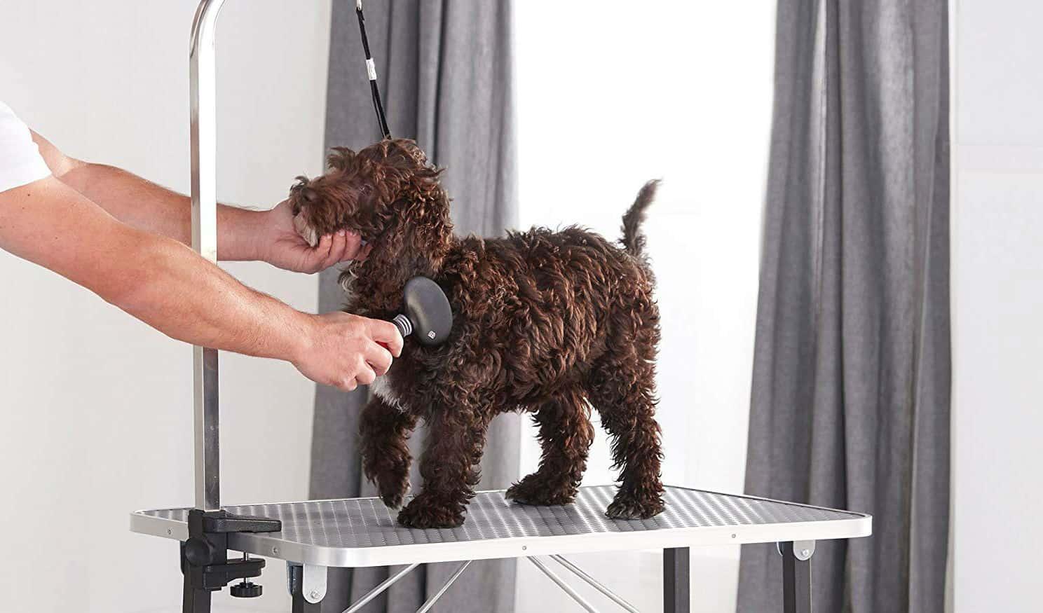 Best Pet Grooming Table Reviews