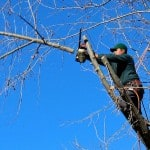 Tree Surgeon Cost Guide - What to expect and how it works