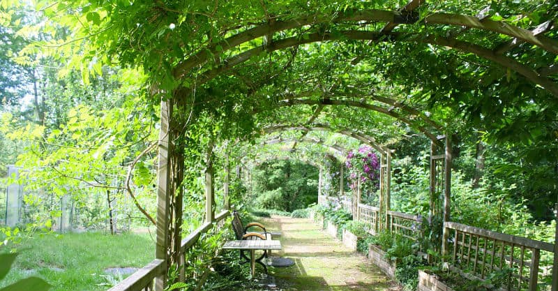best plants for a pergola