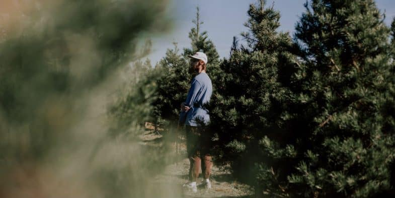 How long do real Christmas trees last (4-6 weeks) Learn more