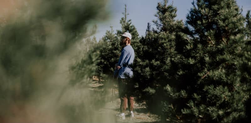 How long do real Christmas trees last - 4-6 weeks - our guide