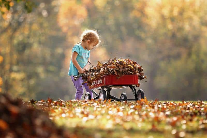 10 tips for dealing with Autumn leaves