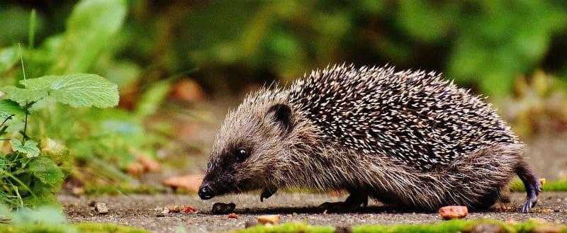 Best Hedgehog House Reviews