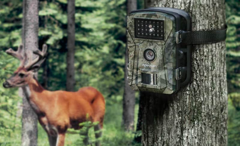 Best Garden Wildlife Trial Camera Reviews. Top 5 models and buyers guide