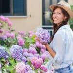 Growing hydrangeas - beginners guide