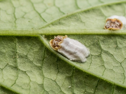 Look out for pests in the garden such as aphids, slugs and snails