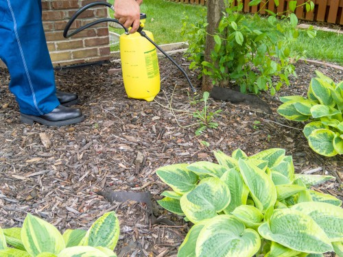The last option which we try to avoid using if possible is spraying them with a strong weedkiller, we recommend spraying weeds as they germinate and are small seedling, spraying is much more effective and they will simply die off back into the ground.