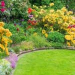 If you are looking for the best shrubs with yellow flowers to perfectly complement whatever colour pattern and scheme you have in your garden, then you need to incorporate one of these top 10 beautiful yellow flowering shrubs.