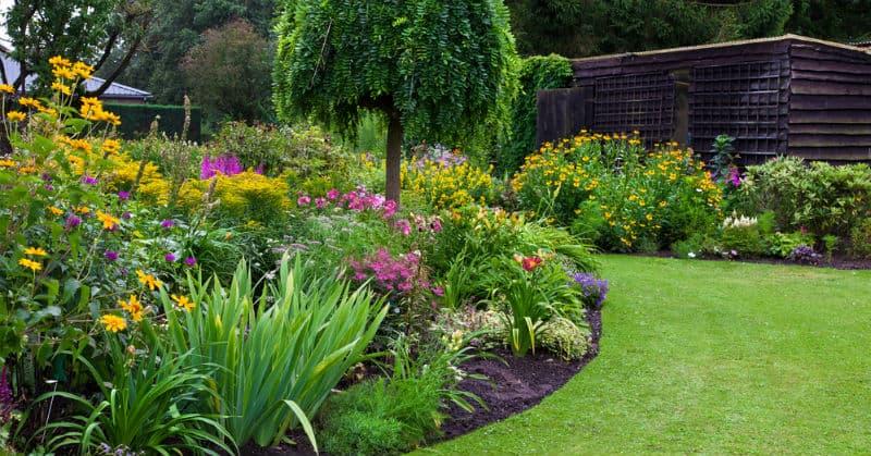 top 10 favourite spring flowering shrubs