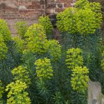 Looking for Fast Growing Evergreen Shrubs? Whether you're looking to fill a gap, plant a screen or create a hedge we have 12 shrubs to consider for all situations.