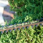 In this article, we look at how to prune conifers correctly. We look at hedging conifers, how and when to prune and large specimen conifers. When and how discussed.