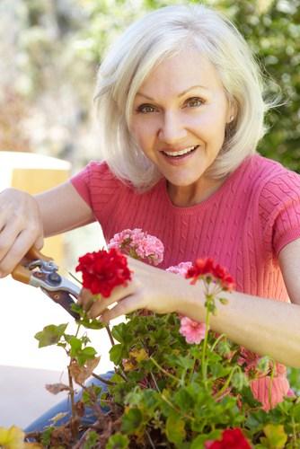 Pruning geraniums