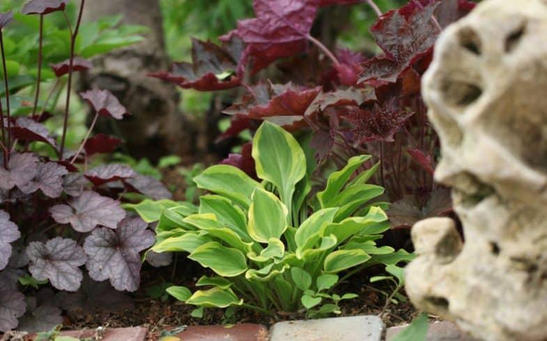 10 Inspiring Shade Loving Plants
