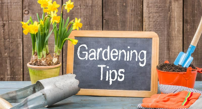 top garden tips for beginners with pictures