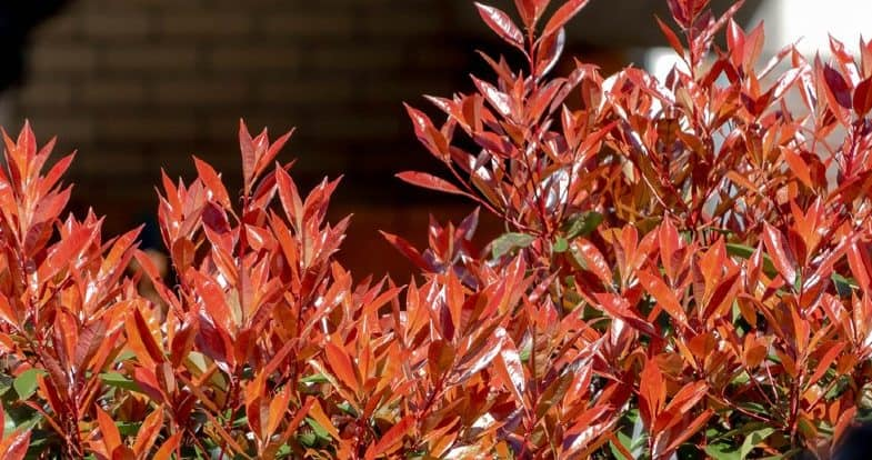8 Best Tall Plants For Screening