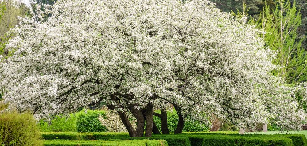 In this post, we look at 10 of our favourite trees to screen out neighbours, we have a mixture of evergreen and deciduous trees on our list, find your tree now