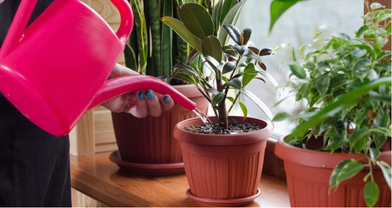 In this post, we look at 10 of the best house plants that are easy to care for and grow well in direct light, indirect and shady positions. Top recommendations
