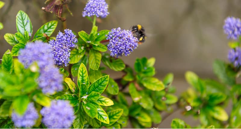 There are some exciting plants for bees which can be planted in your garden to help your local bees, in this post we look at 10 of our favourite plants for bees