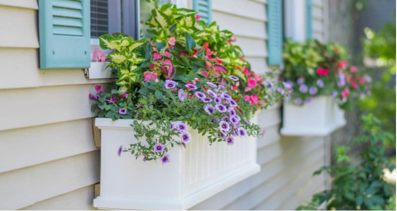 Best plants for window boxes
