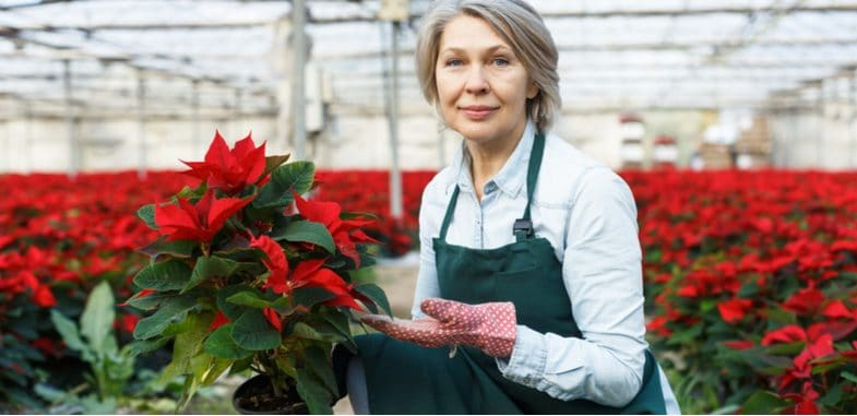 Poinsettia Care and Growing Guide