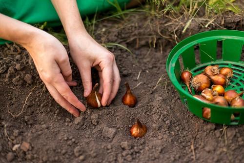 how deep to plant bulbs