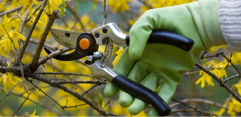 Pruning shrubs guide