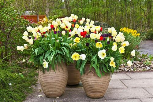 when to plant bulbs - Autumn