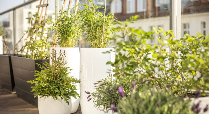Best Types Of Plants For A Balcony