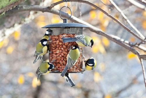 Gives birds what they need and they will come. This means a suitable habitat and the right kind of food