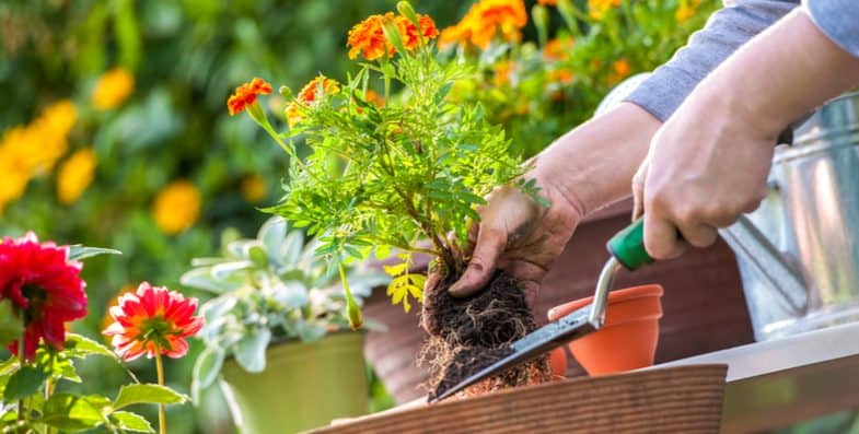 Gardening Jobs For May