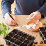 Gardening jobs for April. Sow vegetable and bedding, sow sweet peas, weed borders, repair lawns.