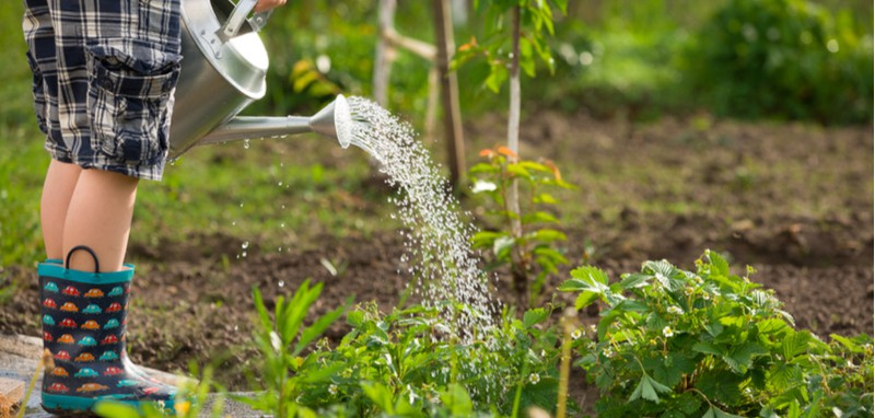 June is an exciting time to be in the garden as you can enjoy your hard work but there is still plenty to do. See our gardening jobs for June, over 20+