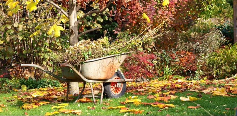 Gardening Jobs For October