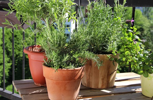Best herbs for growing on a balcony